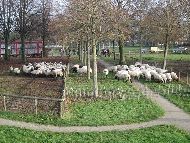 Schaapskudde Zwolle