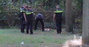Pitbull dood Zwolle