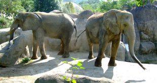 'Zwolle moet dierentuin krijgen'