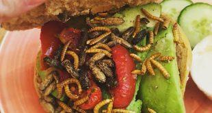 Insecten Bagels en Beans