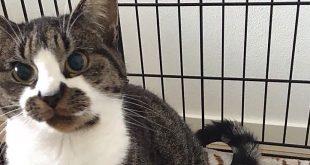Kat beschoten in Zwolle-Zuid
