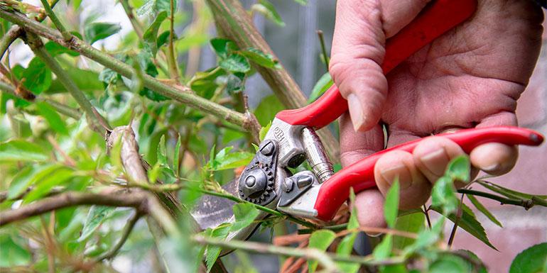 Handige tuintips voor tuinonderhoud
