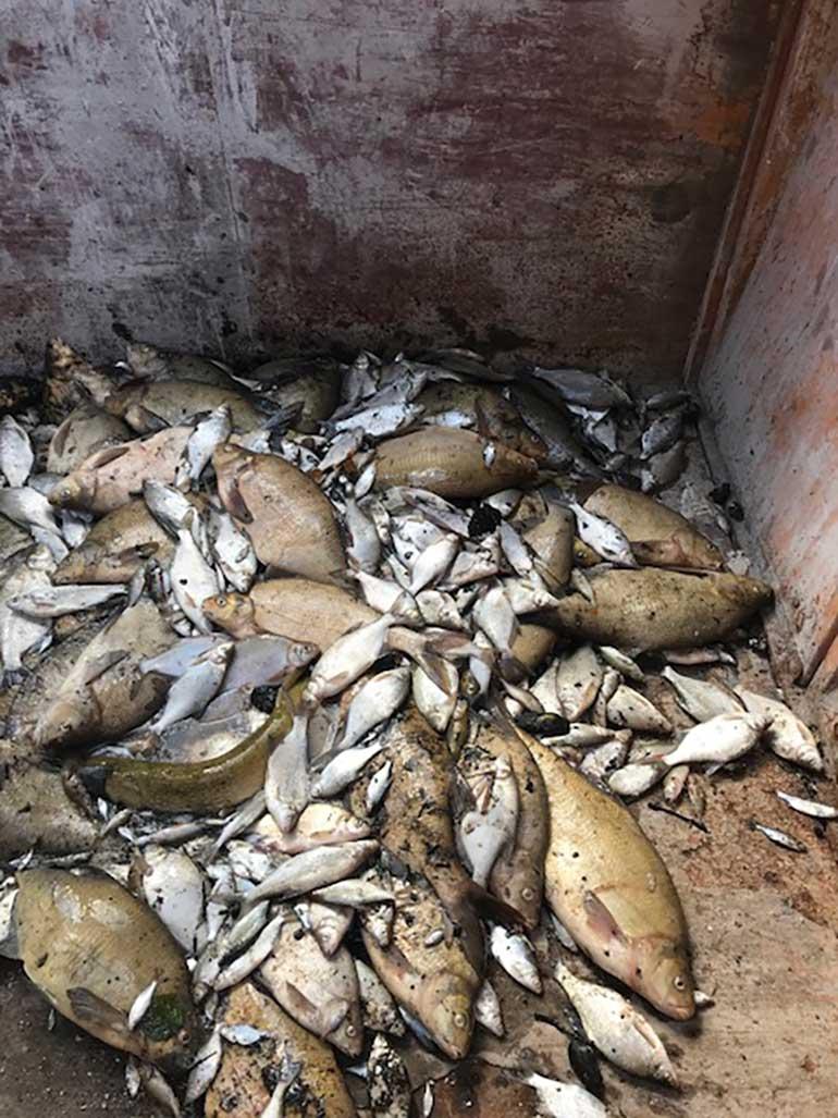 Vissen dood De Dobbe